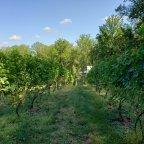 2019 Vineyard Tour and Update at Arterra